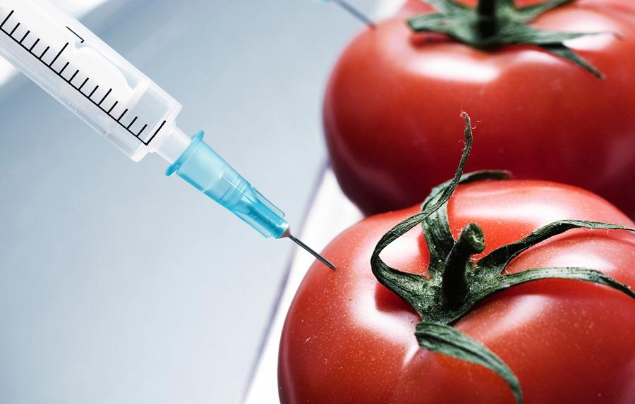 GM Foods: Aliens of the food world