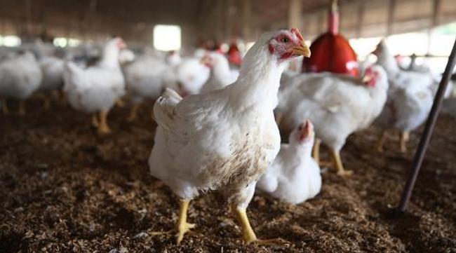 Taiwan's first bird flu death