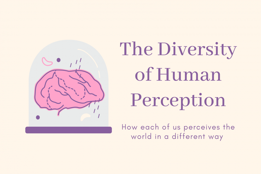 The Diversity of Human Perception